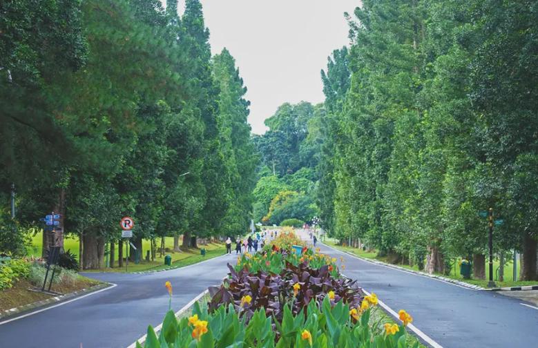 Inilah 6 Aktivitas di Kebun Raya Bogor yang Bisa Anda Lakukan